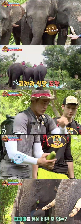 [사진=SBS 방송화면] '정글의 법칙 IN 메르귀' 멤버들이 미얀마 코끼리 보호소를 방문했다.