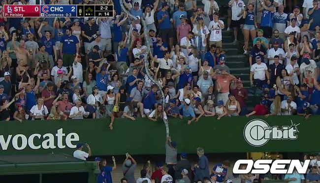 [사진]14일(한국시간) 시카고 컵스와 세인트루이스 카디널스의 경기가 벌어진 리글리 필드에 등장한 컵뱀. <ESPN 선데이 나잇 베이스볼 중계 화면 캡처>